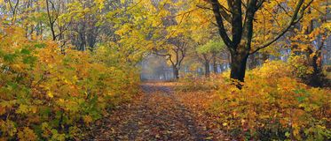 Autumn forest. A path is in the autumn forest. Morning fog Royalty Free Stock Images
