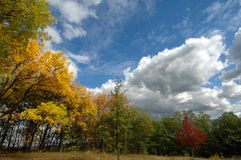 Autumn forest. With fantastic clouds in the sky Stock Photos