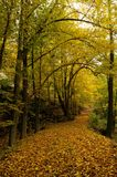 Autumn forest. Cross country track and leaves Stock Photography