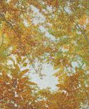 Autumn forest. Autumn color tree brunches in forest stock photography