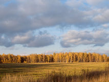 Autumn forest. Landscape with Autumn forest and field royalty free stock photo