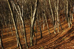 Autumn forest. In the slop Stock Image