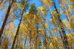 Autumn_forest Images libres de droits
