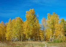 Autumn forest. Path leading to the autumnal woods with golden foliage Royalty Free Stock Image