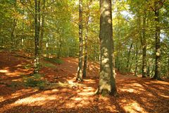 Autumn_forest Imagens de Stock Royalty Free