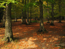 Autumn forest. This picture shows a forest in the autumn season Stock Photo
