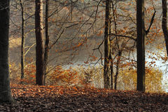 Autumn forest. Leafy forest in fall colors Stock Photos
