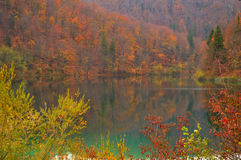 Autumn forest. Deciduous forest in autumn mirrors in a lake in Plitvice (Croatia - Hrvatska Stock Image