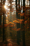 Autumn in forest Stock Images