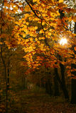 Autumn in forest Royalty Free Stock Photos
