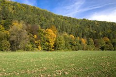 Autumn forest. Autumn, forest near Zlotoryja town in Poland Royalty Free Stock Photography