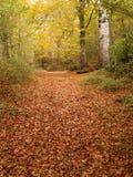 Autumn forest. In Urbasa, Navarra stock image