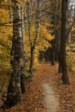 Autumn in the forest. Late autumn in the forest Stock Photography