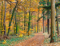 Autumn forest. Image of the autumn forest Royalty Free Stock Photo