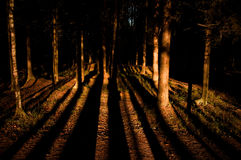 Autumn forest. Long trees shadows in the autumn forest Royalty Free Stock Photography