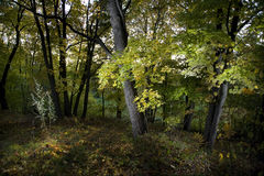 Autumn forest. With flash light Stock Photos