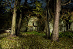 Autumn forest. In night-time by flash lightning Stock Photo