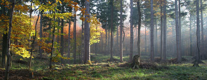 Autumn forest. Sunbeams on a small forest path Stock Photography