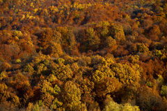 Autumn forest. With rich colors Royalty Free Stock Photo