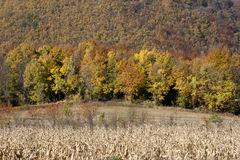 Autumn forest. Landscape view in Croatia(Zagorje), forest in the autumn Stock Photos