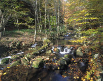 Autumn forest. Creek in autumn forest, slovakia Royalty Free Stock Image