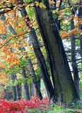 Autumn forest. In Czech Republic Royalty Free Stock Photo