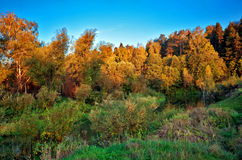 Autumn forest Royalty Free Stock Image