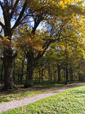 Autumn forest. With road and sunlight Stock Images