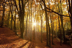 Autumn forest. Stock Images