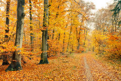 Autumn in the forest. Pathway in the autumn forest, Germany Royalty Free Stock Photos
