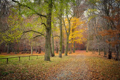 Autumn in the forest. Pathway in the autumn forest, Germany Stock Image