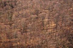 Autumn forest Royalty Free Stock Photos