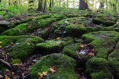 Autumn forest. Ancient stones in the forest covered with green moss Stock Photos