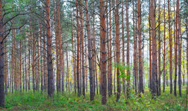 In autumn forest Stock Image