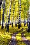 Autumn forest Stock Photography