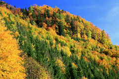 Autumn forest. In Lubochna valley (region Liptov, Slovakia stock photo