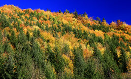 Autumn forest. In Lubochna valley (region Liptov, Slovakia royalty free stock photography