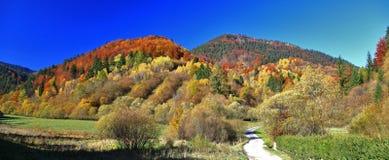 Autumn forest. Near historical village Vlkolinec in region Liptov, Slovakia royalty free stock photography