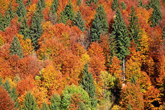 Autumn forest. Near historical village Vlkolinec in region Liptov, Slovakia stock photography