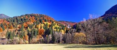 Autumn forest. In region Liptov, Slovakia royalty free stock photo