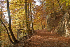 Autumn forest. Way through the autumn forest covered with fallen leaves Royalty Free Stock Image