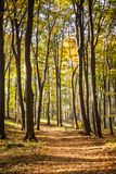 Autumn Forest. Beautiful autumn forest in Hungary stock image