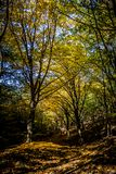 Autumn Forest. Colorful forest trail, autumn scene Stock Images