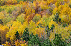 Autumn forest. Mixed forest in October Royalty Free Stock Images