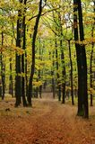 Autumn forest. In Czech Republic with colorfull trees Royalty Free Stock Photos