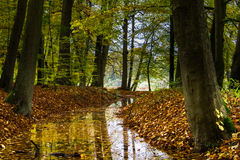 Autumn in the forest Royalty Free Stock Photography