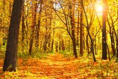 Free Autumn Forest Stock Photos - 31041763