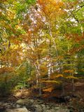 Autumn_Forest Stock Photos