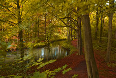 Autumn in the forest Stock Image