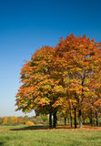 autumn forest Στοκ Εικόνες